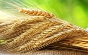 закуп зерновых бобовых и масленичных культур